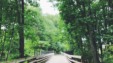 Picture of a trail in Amherst, MA.